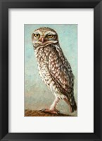 Framed Burrowing Owl