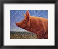 Framed Free Range Pig