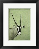 Framed Gemsbok