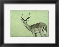 Framed Impala