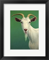 Framed Portrait of A Goat