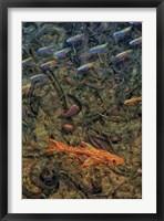 Framed Aquarium 2