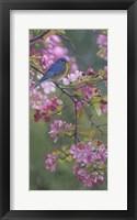 Framed Bluebird Pink Blossoms