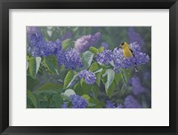 Framed Hint of Gold - Goldfinch and Lilacs