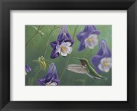 Framed Hummingbird Purple - Columbine