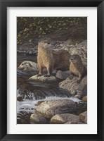 Framed Otter Tail River Otters