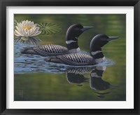 Framed Loon Pair