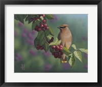 Framed Waxwing Berries