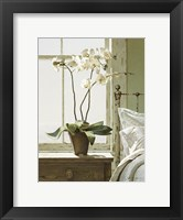 Framed Orchids In The Window