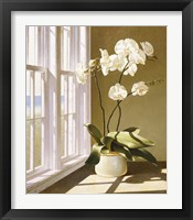 Framed Pot Of Orchids