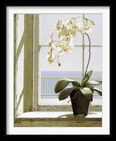 Framed Flower In Window