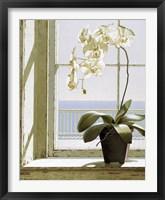 Framed Flower In Window