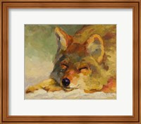 Framed Chillin Coyote
