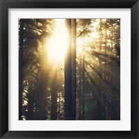 Framed Woodland Glow