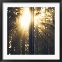 Framed Woodland Glow