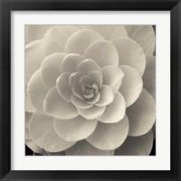Framed Camellia I