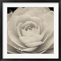 Framed Camellia II
