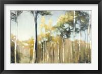 Framed Aspen Reverie