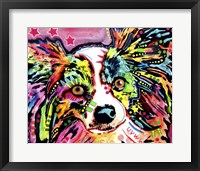 Framed Papillon 9149