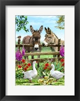 Framed Donkeys