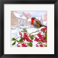Framed Robin 3