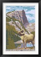 Framed Rocky Mountain Park Ram