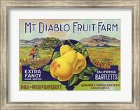 Framed Mt. Diablo Fruit Farm Bartletts