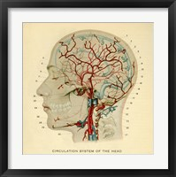 Framed Brain Head