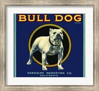 Framed Bull Dog Brand
