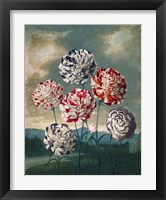 Framed Group of Carnations
