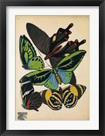 Framed Butterflies Plate 1
