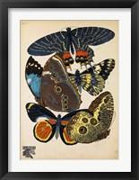 Framed Butterflies Plate 10