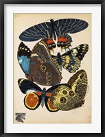 Framed Butterflies Plate 10