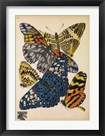 Framed Butterflies Plate 11