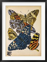Framed Butterflies Plate 11