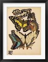 Framed Butterflies Plate 14