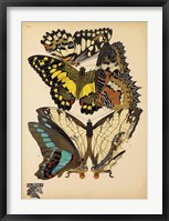 Framed Butterflies Plate 14