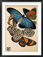Framed Butterflies Plate 2