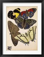 Framed Butterflies Plate 3