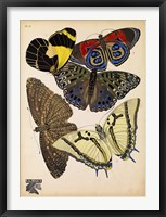 Framed Butterflies Plate 3