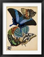 Framed Butterflies Plate 4