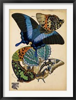 Framed Butterflies Plate 4