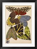 Framed Butterflies Plate 5