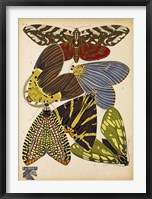 Framed Butterflies Plate 5