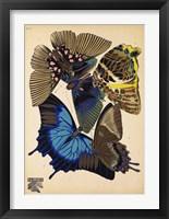 Framed Butterflies Plate 9