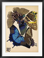 Framed Butterflies Plate 9