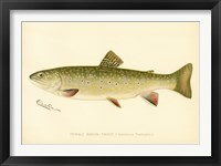 Framed Female Brook Trout