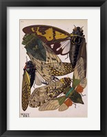 Framed Insects, Plate 11