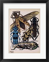 Framed Insects, Plate 13