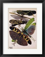 Framed Insects, Plate 2